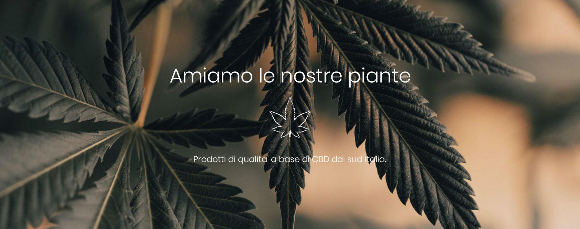 Sansativa Italiano
